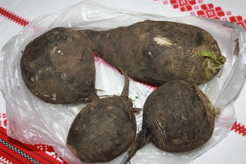 Giant black radishes